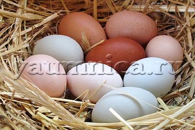 яйца пернатых польза и вред