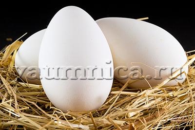 Гусиные яйца польза