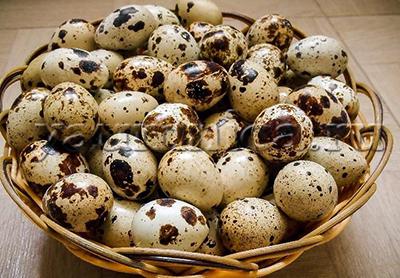 Перепелиные яйца польза
