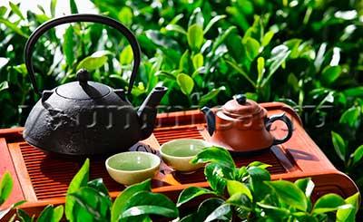 чай сорта